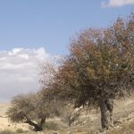 צומח וצמחיה במדבר