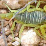 חיים המופלאים של היצורים הקטנים במדבר